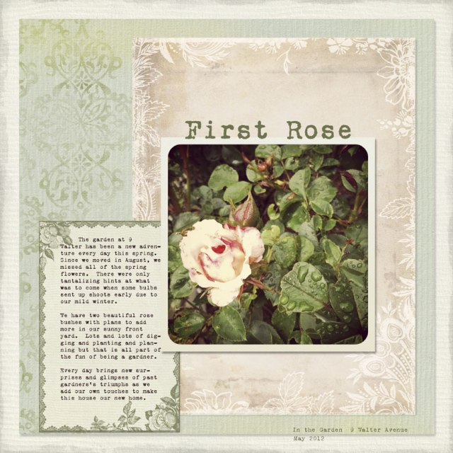 12-06-12-First-Rose-WEB