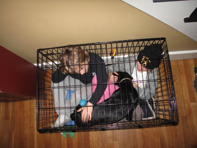 Yes!  all three of them fit in the crate… Shadow is in heaven...